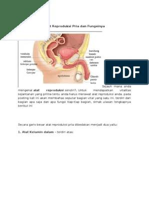 Gambar Alat Reproduksi Laki Laki Dan Fungsinya : gambar, reproduksi, fungsinya, Reproduksi, Fungsinya