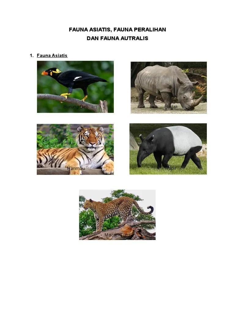Contoh Fauna Peralihan : contoh, fauna, peralihan, Gambar, Fauna, Peralihan, Namanya, Terbaru, Hewan