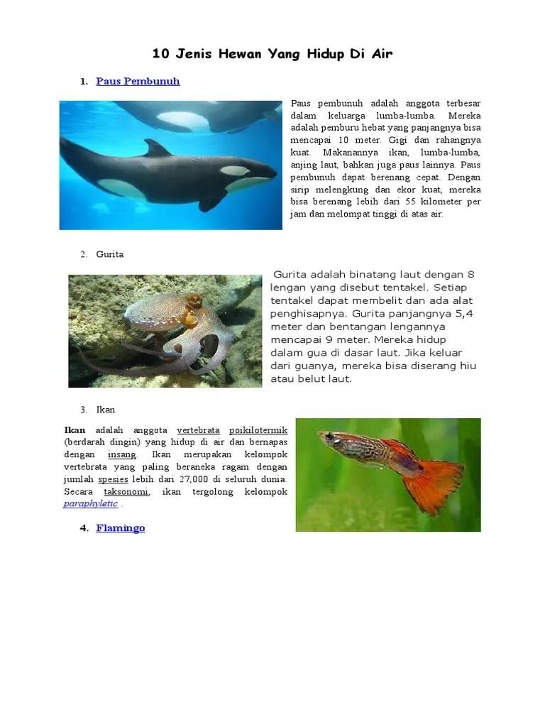 Hewan Yang Hidup Di Air Disebut : hewan, hidup, disebut, Jenis, Hewan, Hidup, Cute766