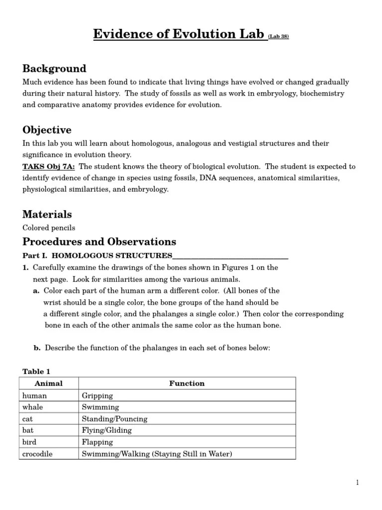 15 2 Evidence Evolution Worksheet Answers Key
