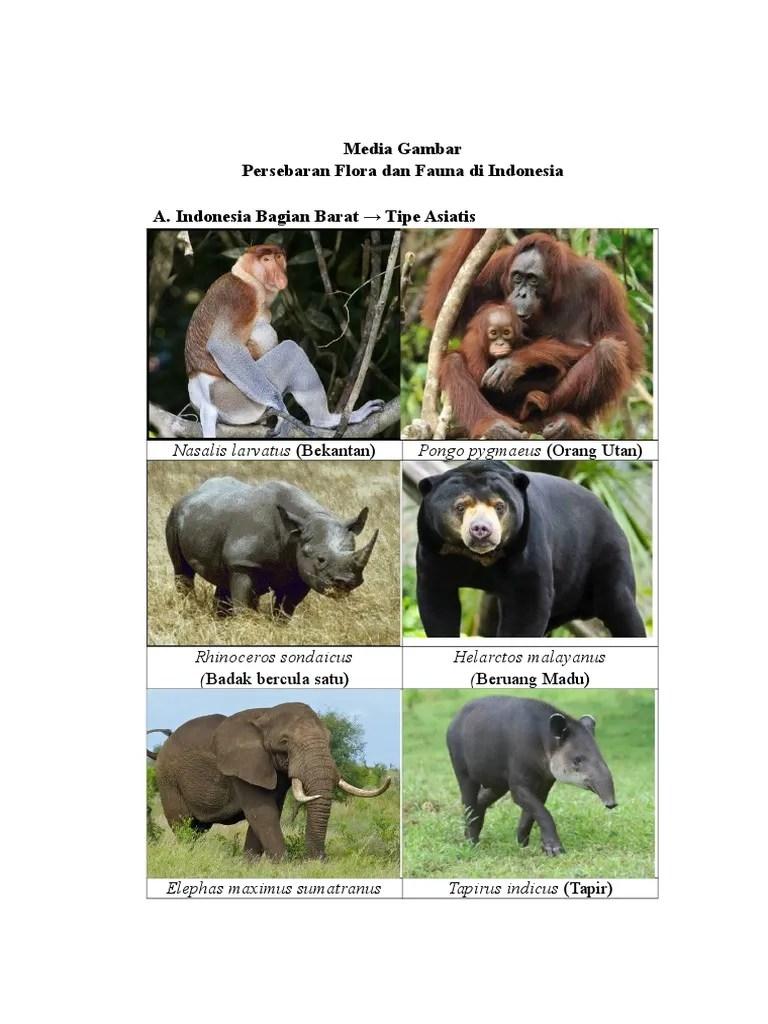 Fauna Bagian Barat Dan Penjelasannya : fauna, bagian, barat, penjelasannya, Koleksi, Gambar, Flora, Fauna, Indonesia, Bagian, Barat, Gratis, Terbaru, Hewan