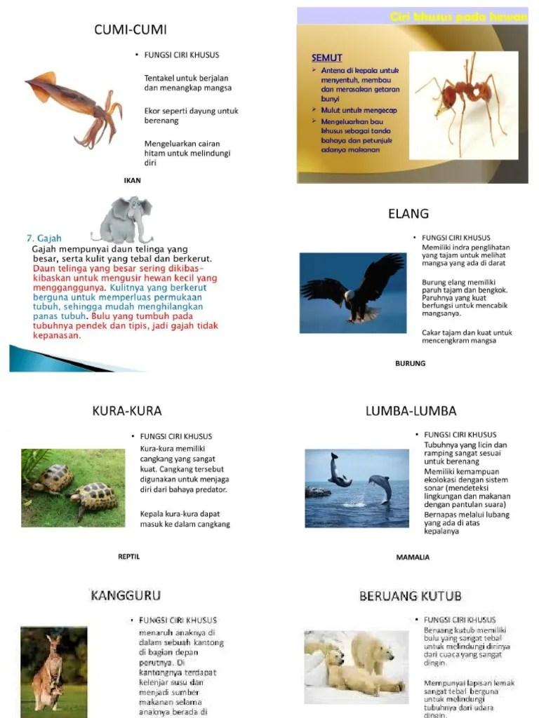 Beruang - Wikipedia bahasa Indonesia, ensiklopedia bebas