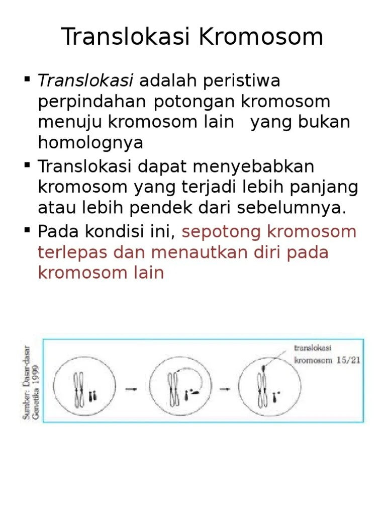 Translokasi Resiprok : translokasi, resiprok, TransLokasi