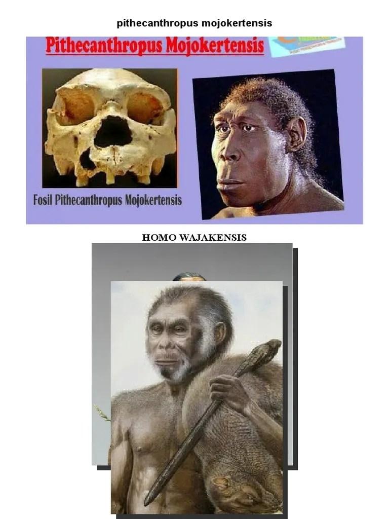 Manusia Purba Pithecanthropus Mojokertensis : manusia, purba, pithecanthropus, mojokertensis, Manusia, Purba, Gambar.docx