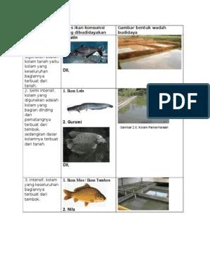 Identifikasi Wadah Budidaya Ikan Konsumsi : identifikasi, wadah, budidaya, konsumsi, Wadah, Budidaya
