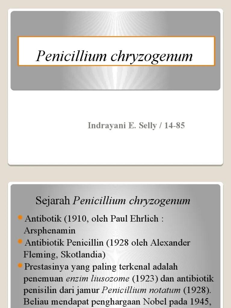 Penicillium Adalah : penicillium, adalah, Penicillium, Chryzogenum