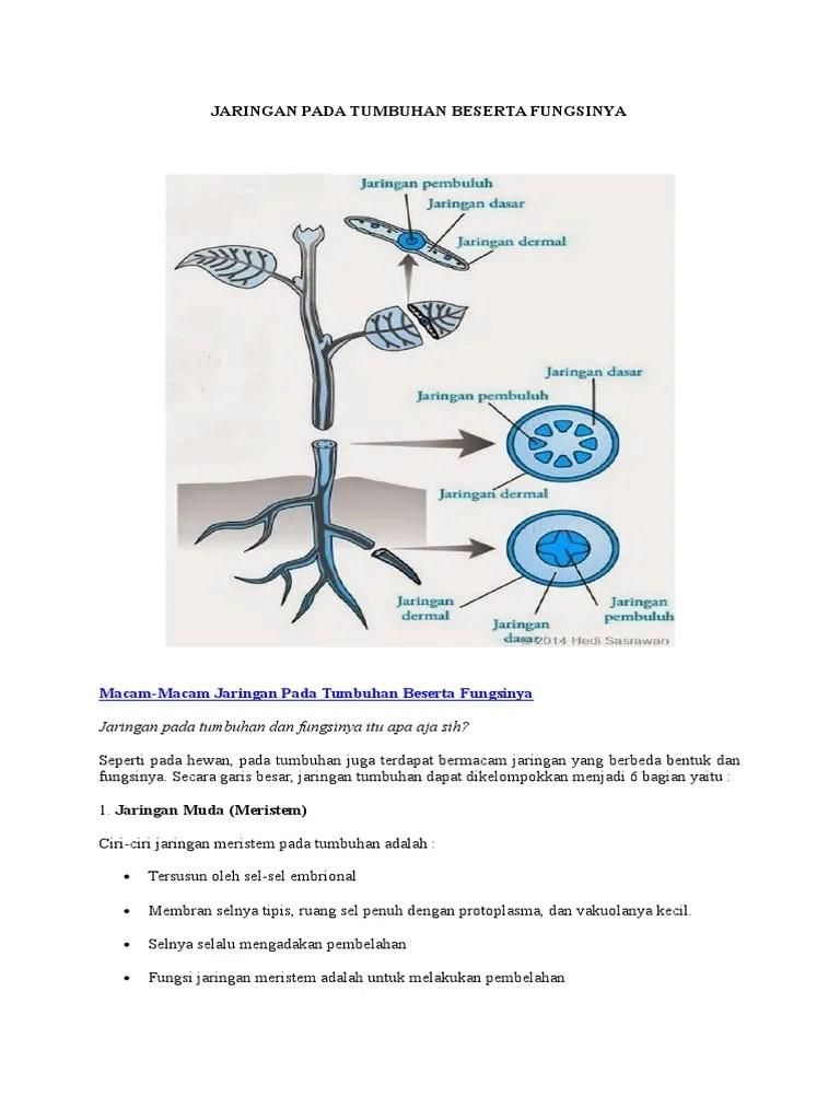 Jaringan Pada Tumbuhan : jaringan, tumbuhan, Jaringan, Tumbuhan, Beserta, Fungsinya