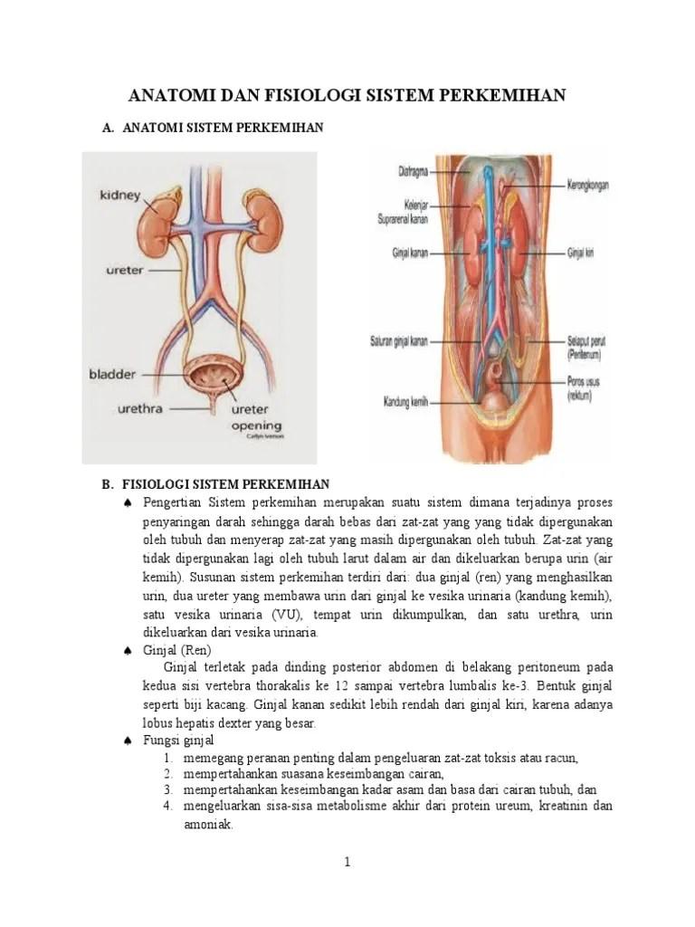 Makalah Sistem Perkemihan : makalah, sistem, perkemihan, Anatomi, Fisiologi, Sistem, Perkemihan