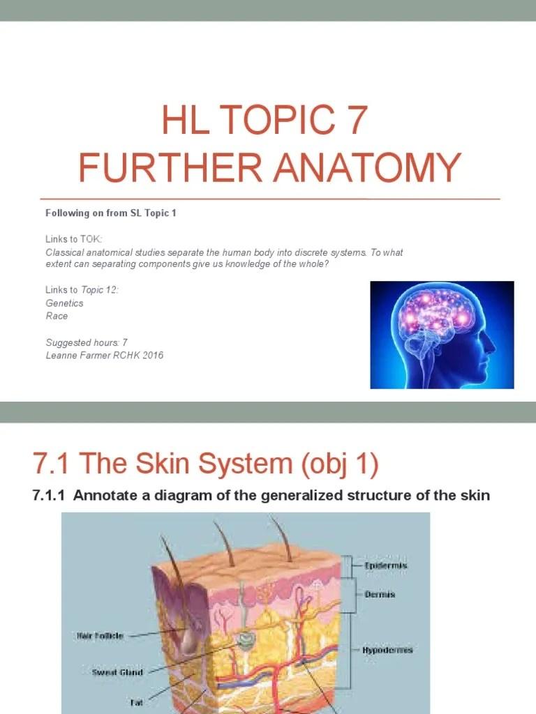 skin system diagram [ 768 x 1024 Pixel ]