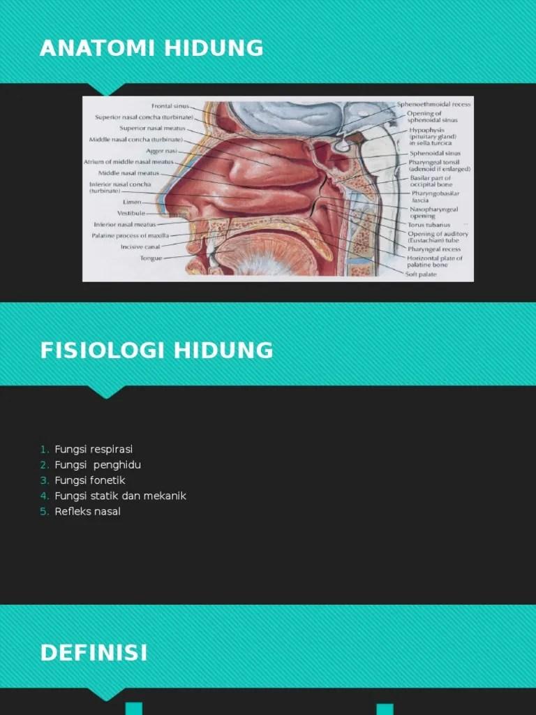 Anatomi Hidung Dan Fungsinya : anatomi, hidung, fungsinya, Anatomi, Hidung