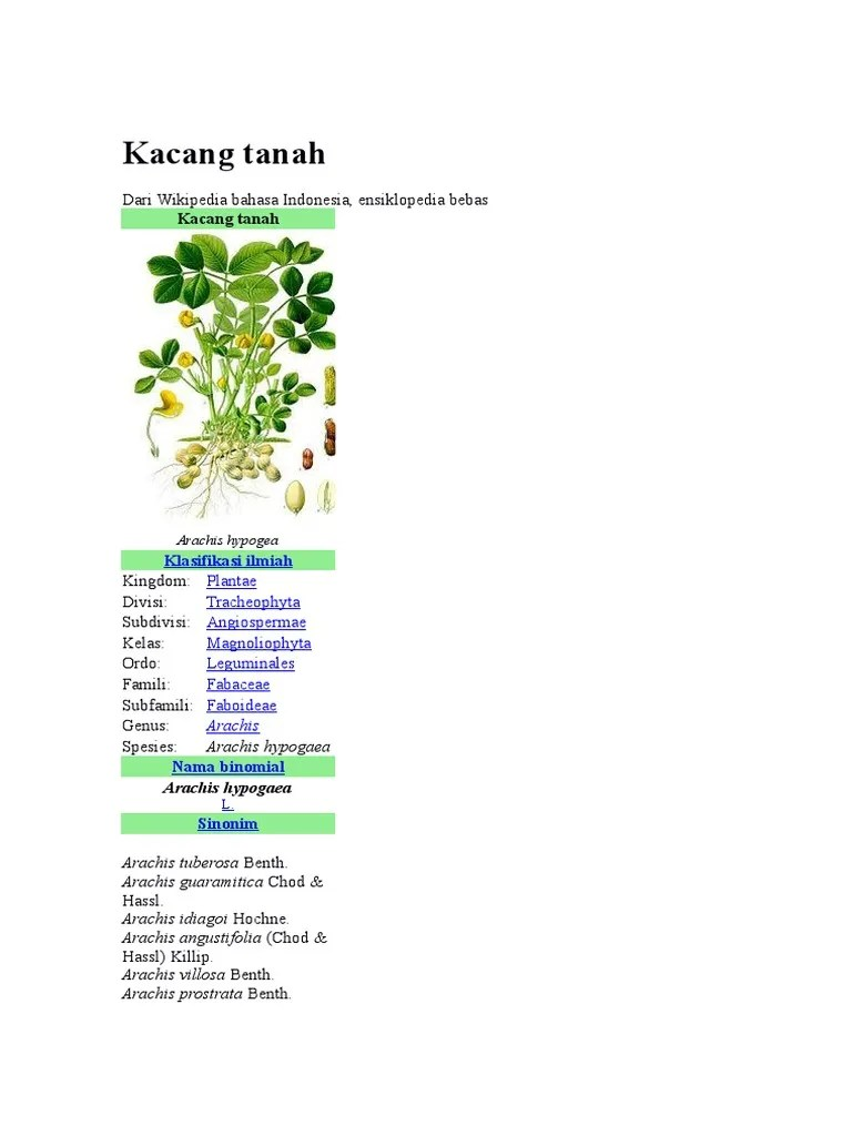 Nama Ilmiah Kacang Tanah : ilmiah, kacang, tanah, Kacang, Tanah, Ilmiah