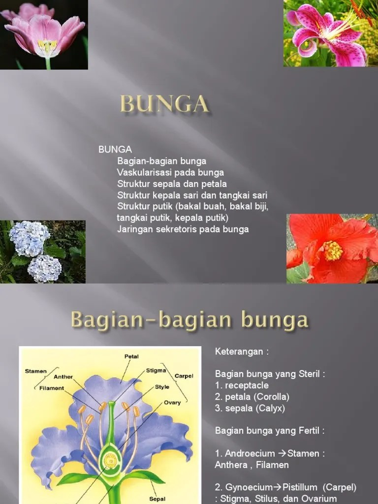 Struktur Bagian Bunga : struktur, bagian, bunga, Struktur, Bunga