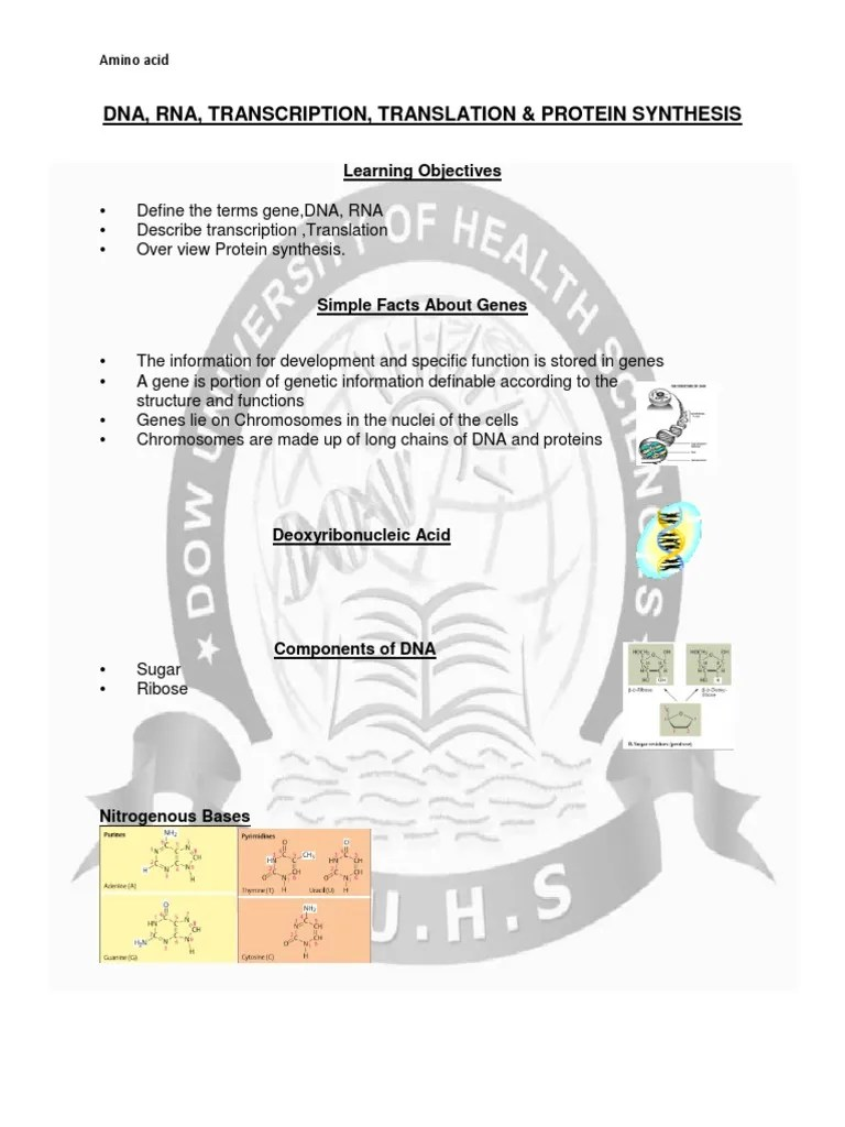 dna rna transcription translation protein synthesis pdf translation biology directionality molecular biology  [ 768 x 1024 Pixel ]
