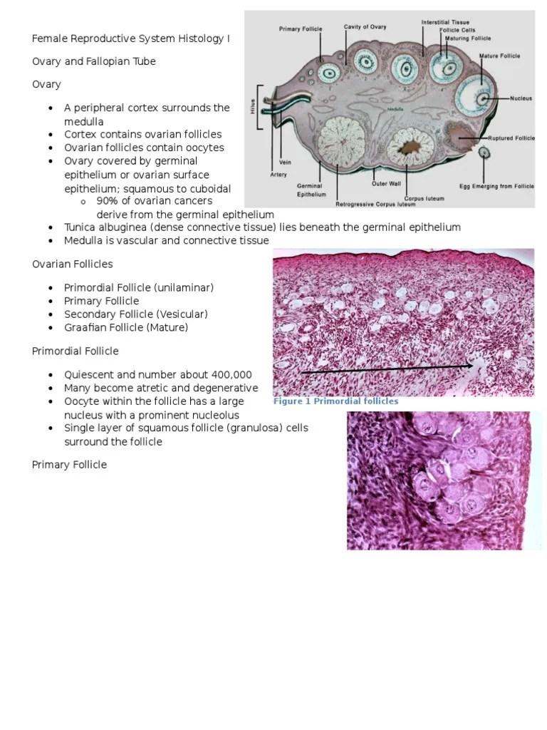 medium resolution of a diagram of ovarian follicle