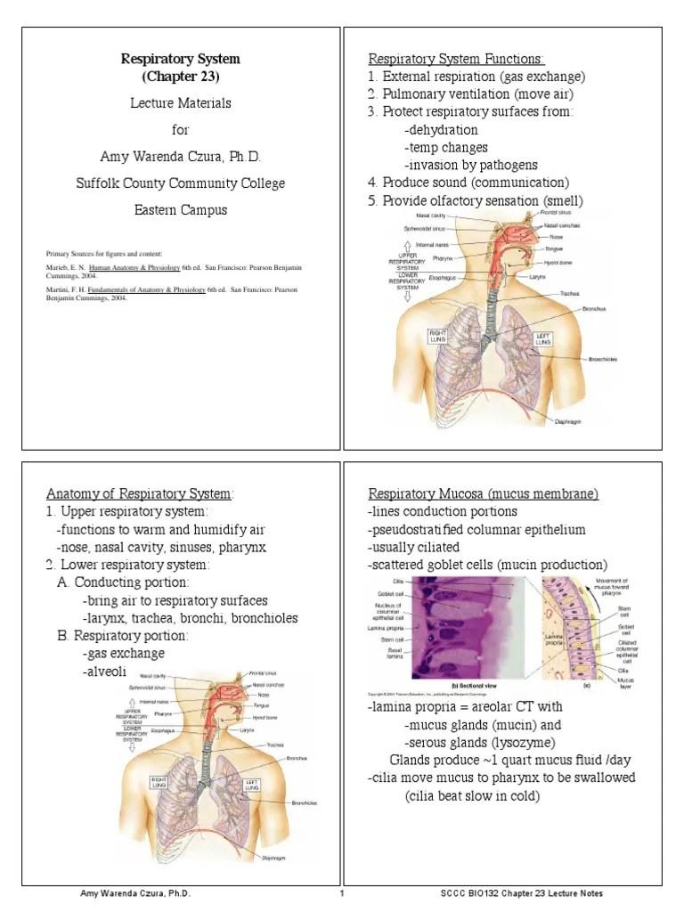 medium resolution of diagram of respiratory system nose