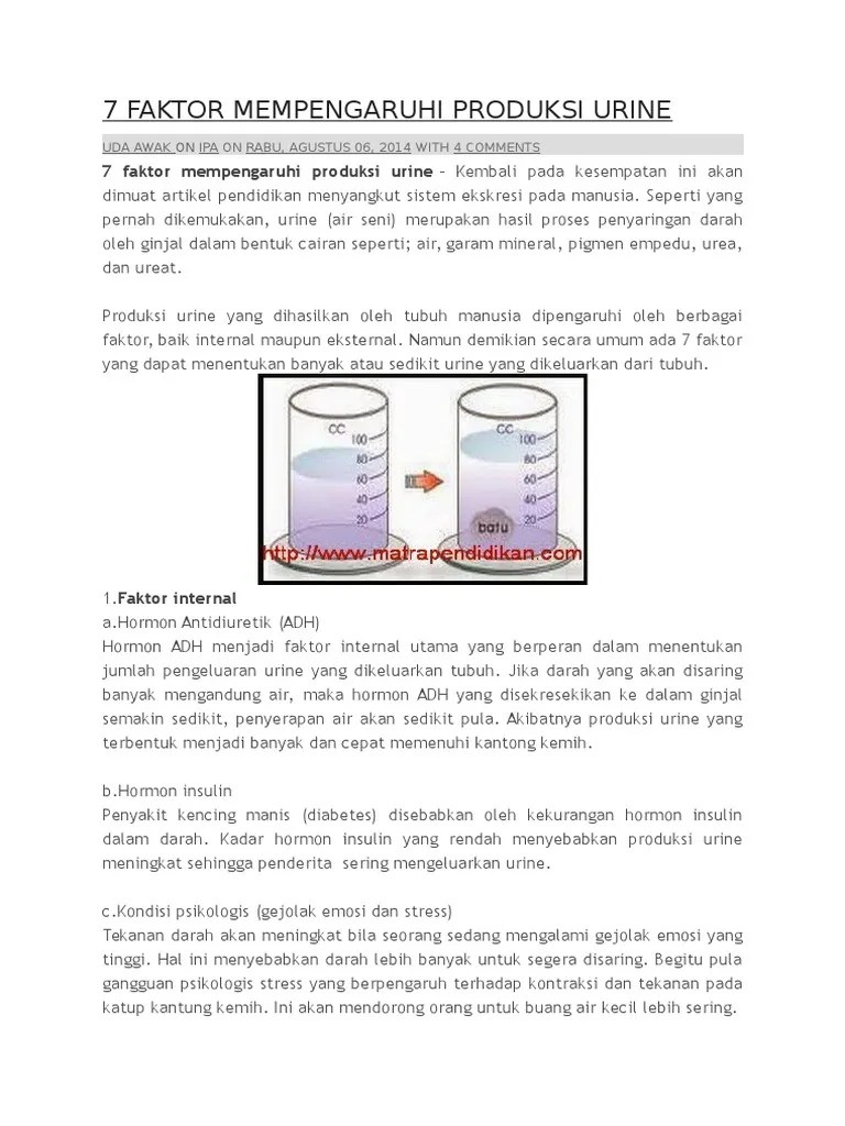 Faktor Yang Mempengaruhi Pembentukan Urine : faktor, mempengaruhi, pembentukan, urine, Faktor, Mempengaruhi, Produksi, Urine