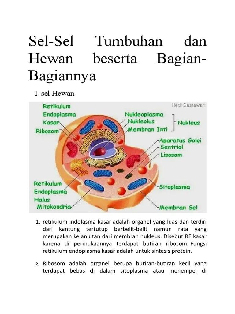 Retikulum Adalah : retikulum, adalah, Budaya