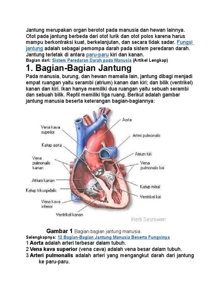 Gambar Bagian Jantung Dan Fungsinya : gambar, bagian, jantung, fungsinya, Bagian, Gambar, Jantung, Fungsinya