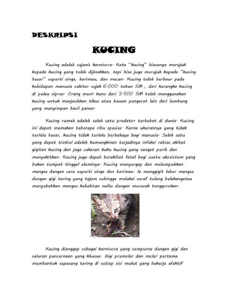Teks Deskripsi Tentang Kucing : deskripsi, tentang, kucing, DESKRIPSI, TENTANG, KUCING