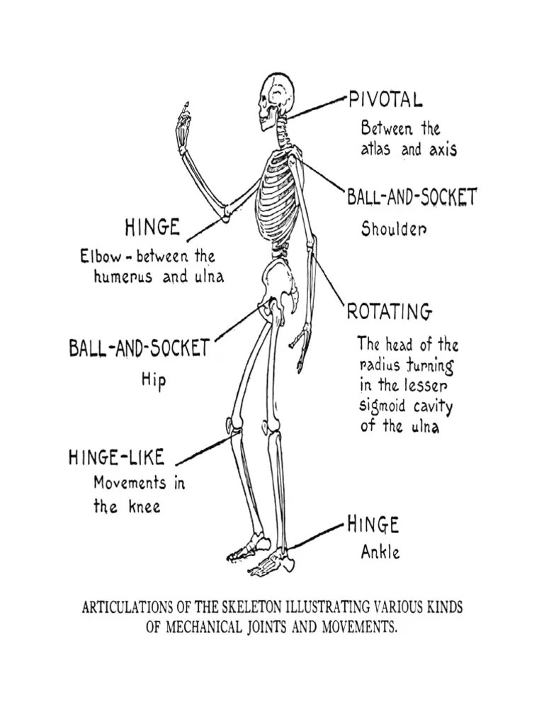 Articulation s | Anatomical Terms Of Motion | Joints