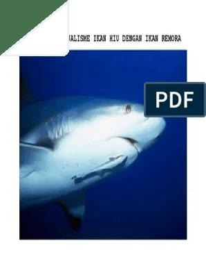 Ikan Hiu Dan Ikan Remora : remora, Simbiosis, Mutualisme, Dengan, Remora