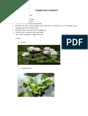 Tumbuhan Hidrofit Beserta Contoh Gambarnya : tumbuhan, hidrofit, beserta, contoh, gambarnya, Untuk, Jenis, Tumbuhan, Hidrofit, Bunga