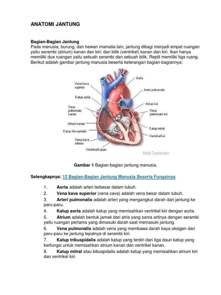 Gambar Bagian Jantung Dan Fungsinya : gambar, bagian, jantung, fungsinya, ANATOMI, JANTUNG