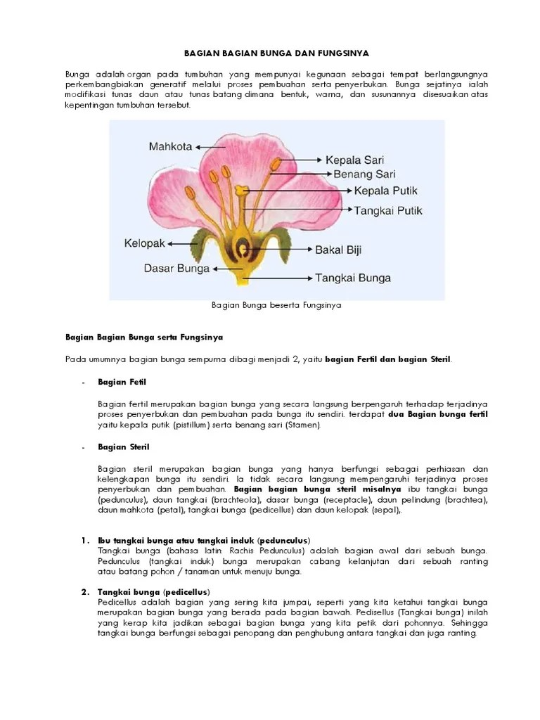 Gambar Bagian Bunga Dan Fungsinya : gambar, bagian, bunga, fungsinya, ARTIKEL, Bagian, Bunga, Fungsinya