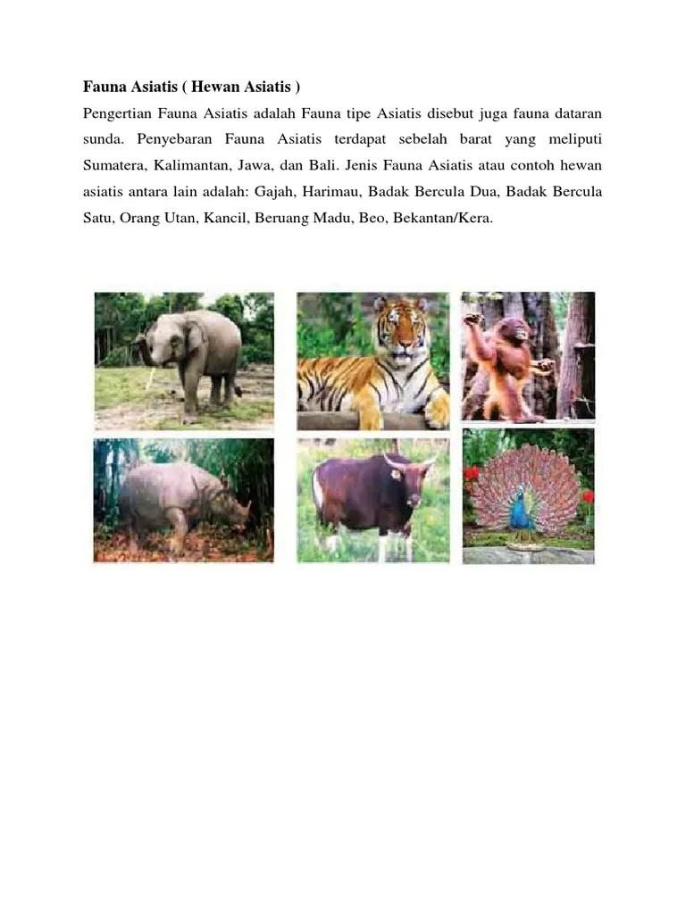 Pengertian Fauna Peralihan : pengertian, fauna, peralihan, 1010+, Gambar, Fauna, Asiatis, Peralihan, Australis, Terbaik, Hewan