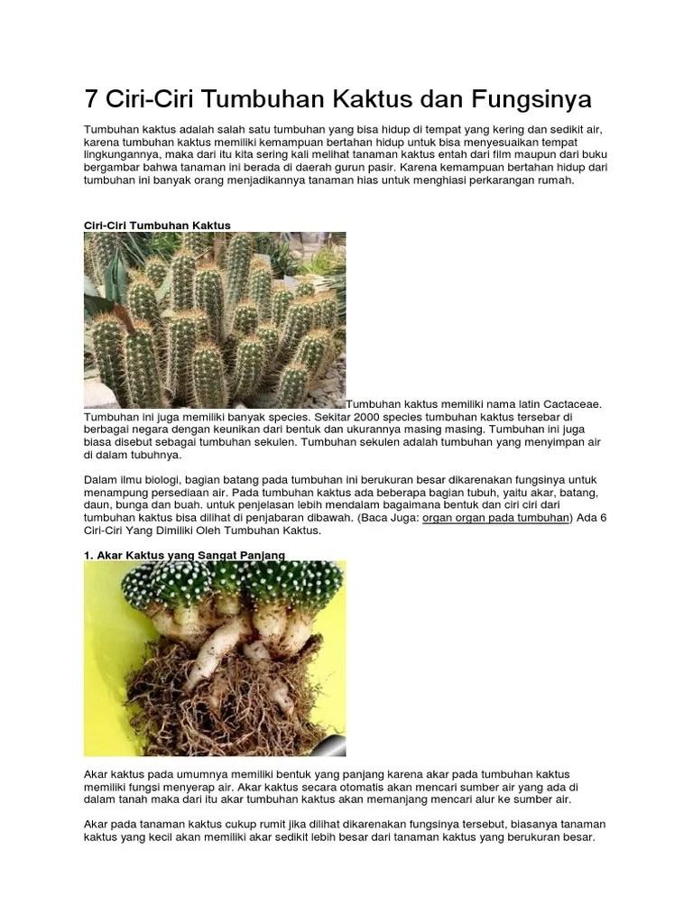 Fungsi Duri Kaktus : fungsi, kaktus, Ciri-Ciri, Tumbuhan, Kaktus, Fungsinya