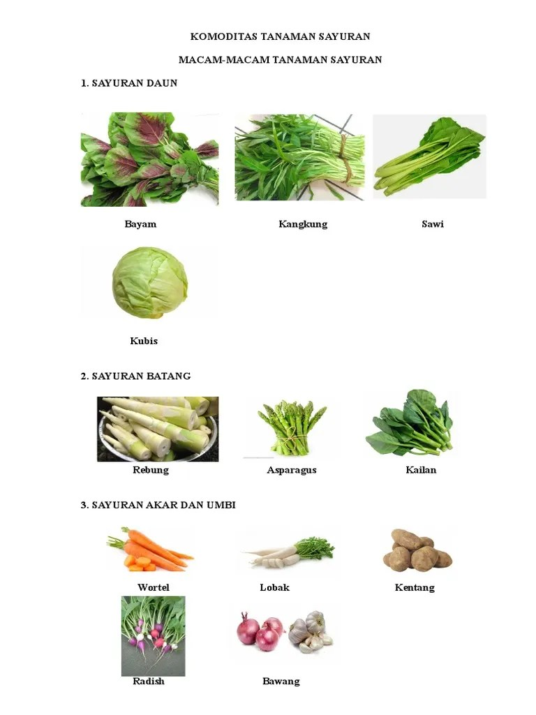 10 Jenis Sayuran Daun dan Manfaat Sayuran Daun