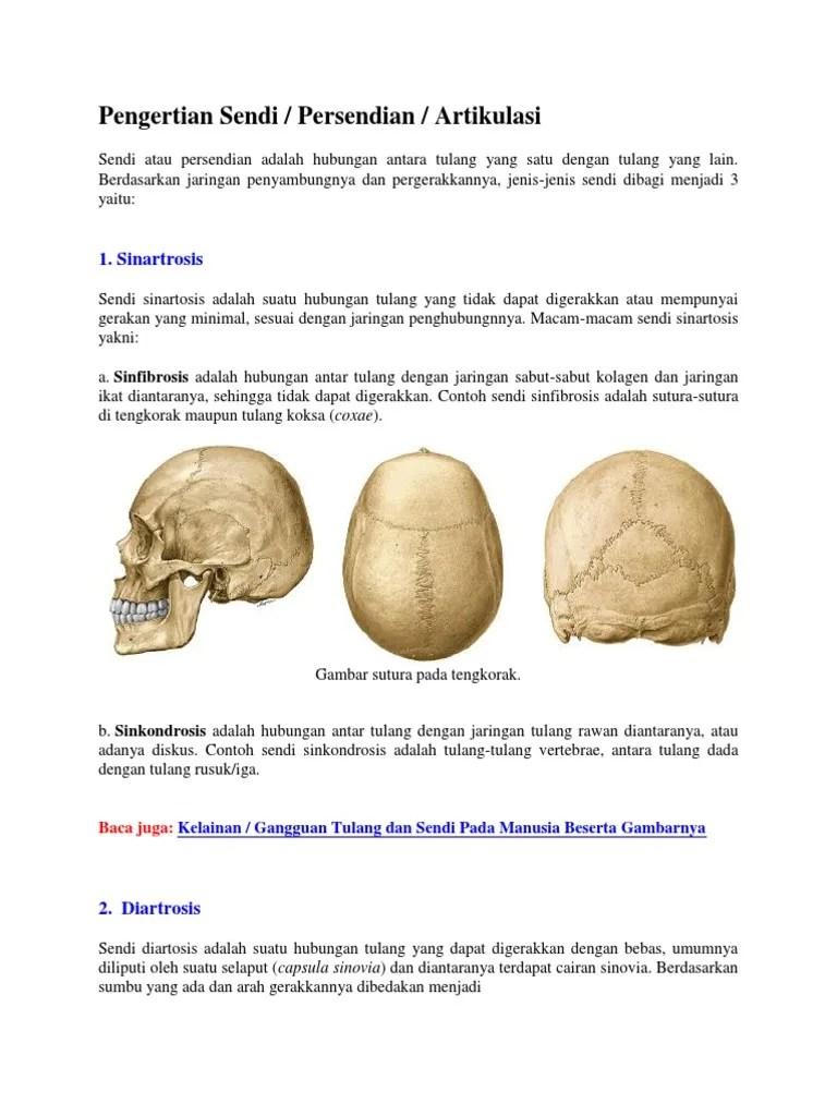 Macam-macam sendi pada tubuh manusia, fungsi dan contohnya