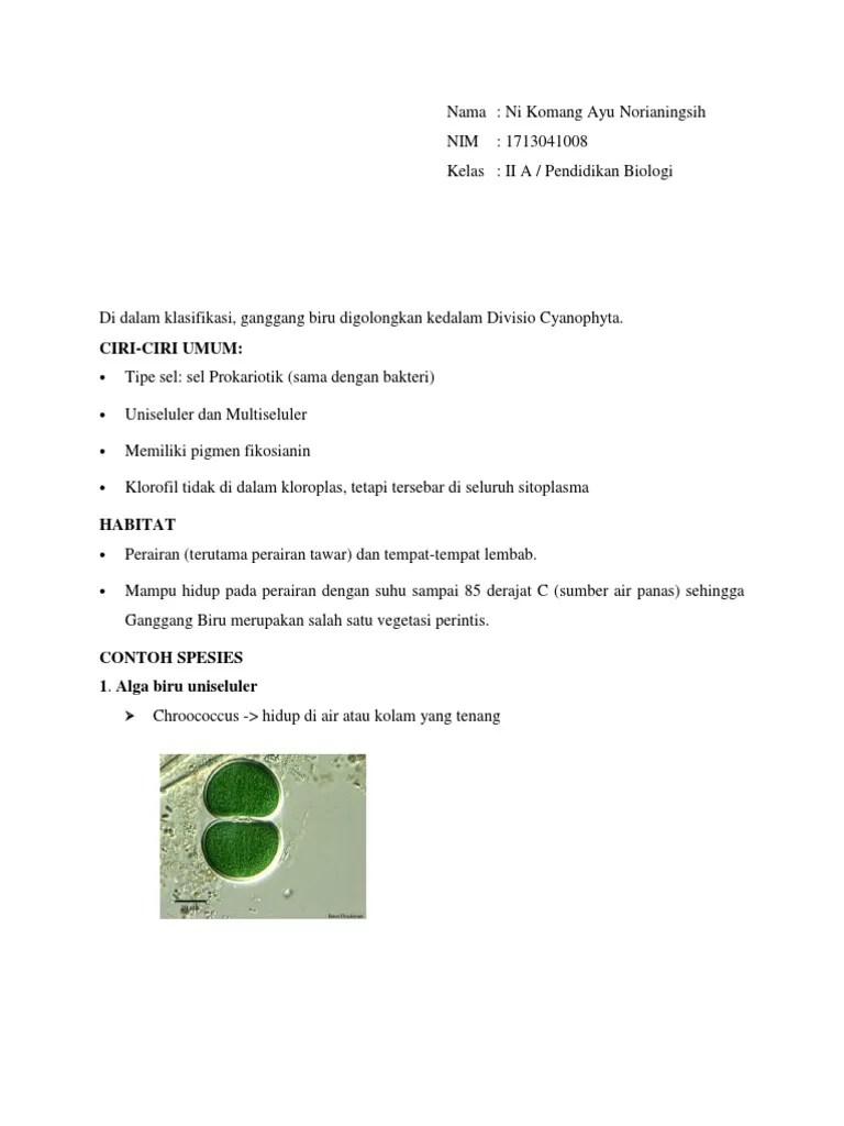 Klasifikasi Alga Biru : klasifikasi, Contoh, Cyanophyta, Bereproduksi, Dengan, Hormogonium, Adalah, Temukan
