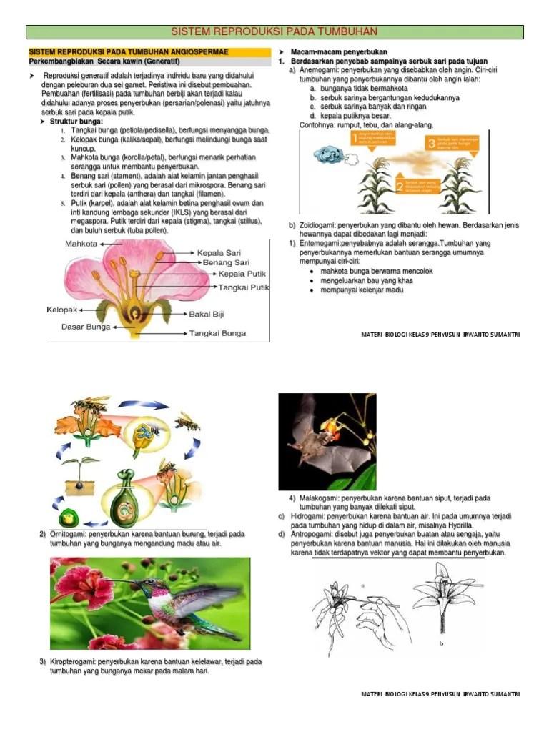 Hidrogami Adalah Penyerbukan Yang Dibantu Oleh : hidrogami, adalah, penyerbukan, dibantu, Reproduksi, Generatif, Angiospermae