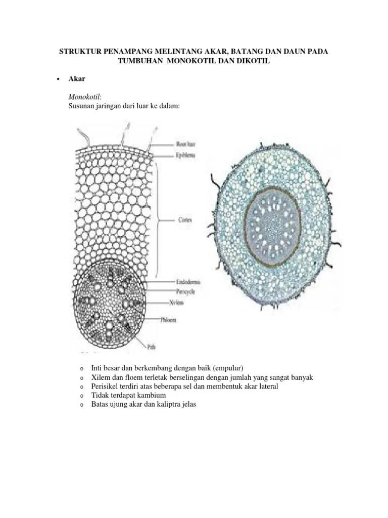 Xilem Dan Floem Pada Batang Monokotil : xilem, floem, batang, monokotil, Struktur, Penampang, Melintang
