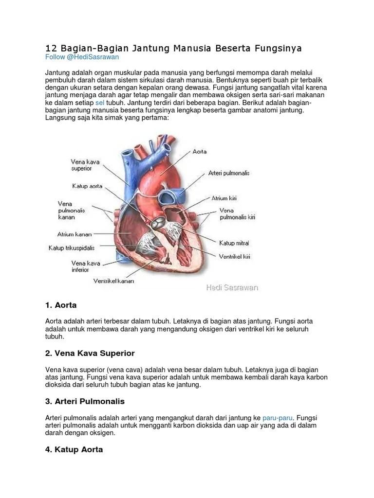 Gambar Jantung Hewan Karnivora dan Fungsinya - Manfaat Sehat...