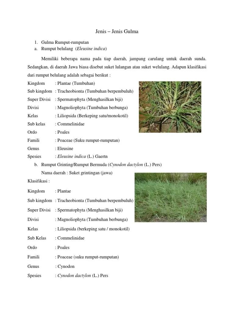 Jenis Rumput Rumputan : jenis, rumput, rumputan, Jenis-, Jenis, Gulma