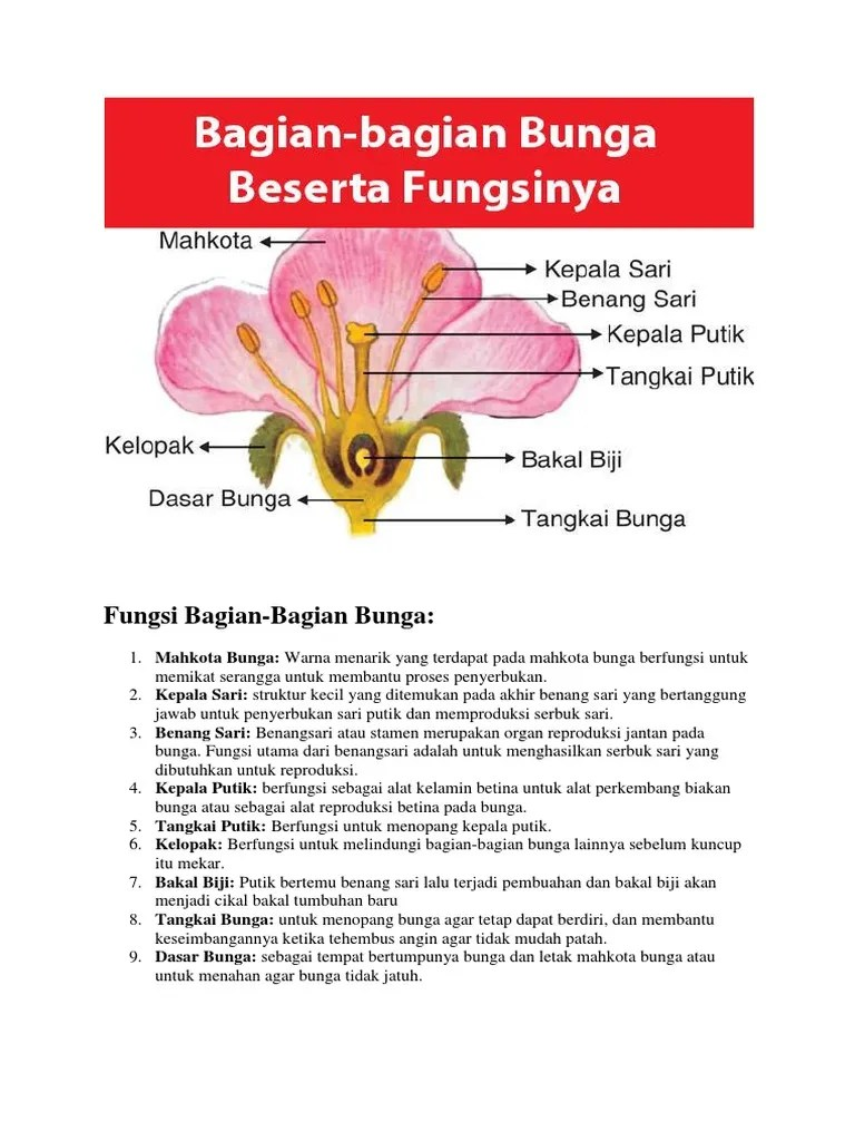 Gambar Bagian Bunga Dan Fungsinya : gambar, bagian, bunga, fungsinya, Fungsi, Bagian, Bunga.docx