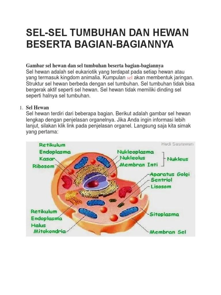 Gambar Mitokondria Dan Bagiannya : gambar, mitokondria, bagiannya, Tugas