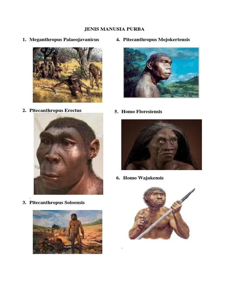 Manusia Purba Homo Wajakensis : manusia, purba, wajakensis, JENIS, MANUSIA, PURBA