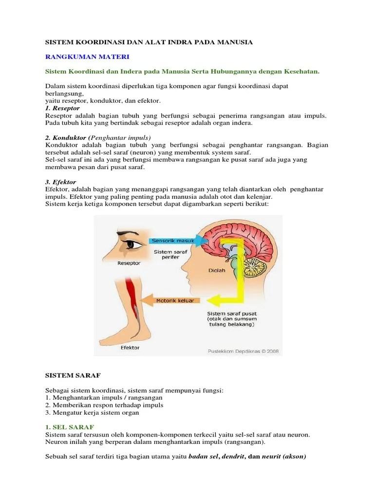Sel Saraf Motorik Berfungsi Membawa Rangsang Dari : saraf, motorik, berfungsi, membawa, rangsang, Neuron, Berfungsi, Menghantarkan, Impuls, Indra, Berbagai