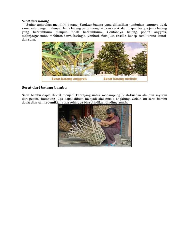 Gambar Serat Batang Anggrek : gambar, serat, batang, anggrek, Serat, Batang