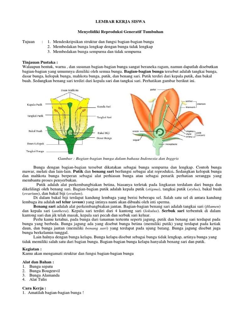 Bagian Bagian Bunga Sempurna : bagian, bunga, sempurna, Mengamati, Bunga.docx