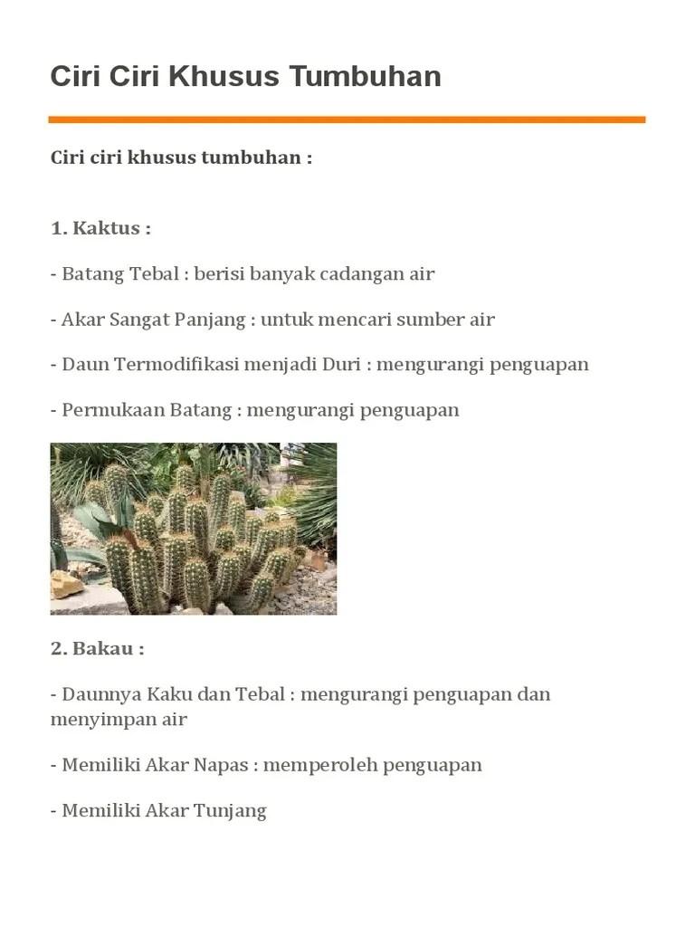 Ciri Khusus Kaktus : khusus, kaktus, Khusus, Tumbuhan