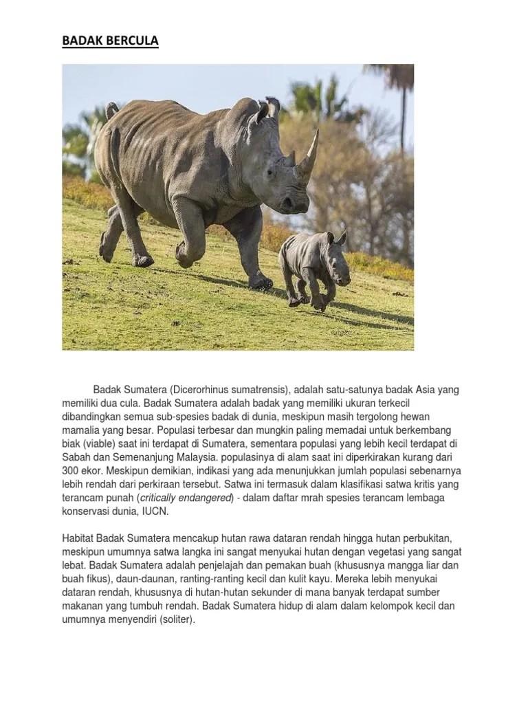 Badak Bercula Satu Berasal Dari : badak, bercula, berasal, Badak, Bercula:, Critically, Endangered