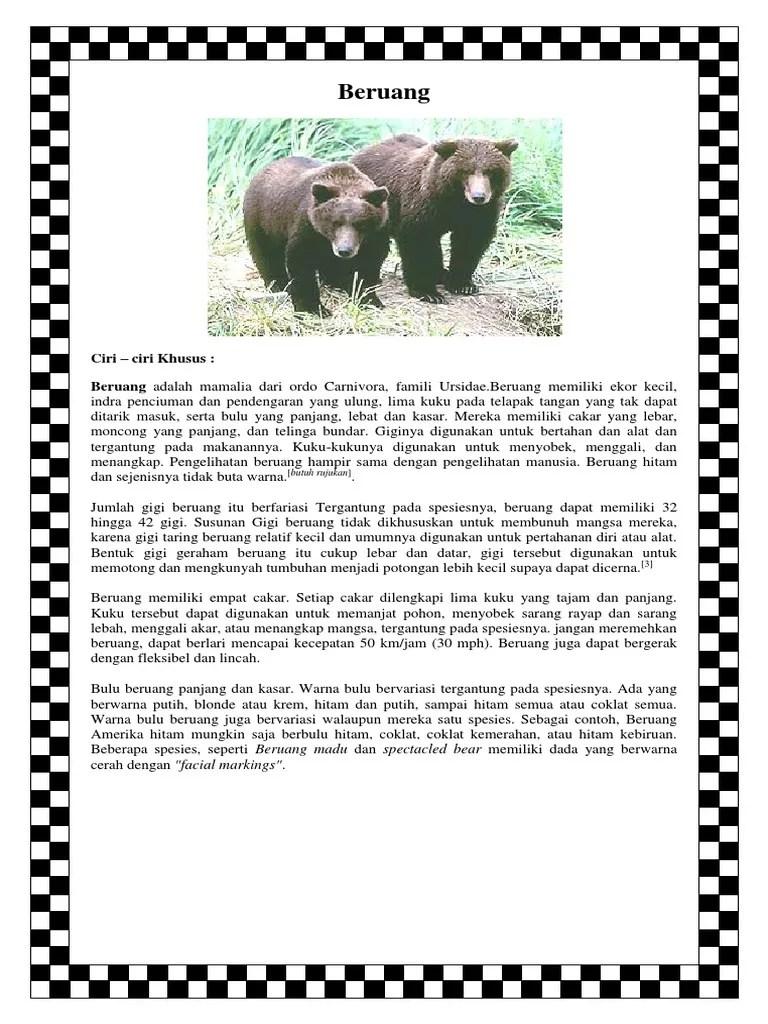 Ciri Ciri Hewan Beruang : hewan, beruang