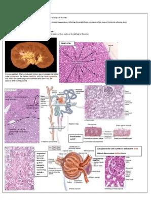 Renal Block 2 | Kidney | Kidney Disease