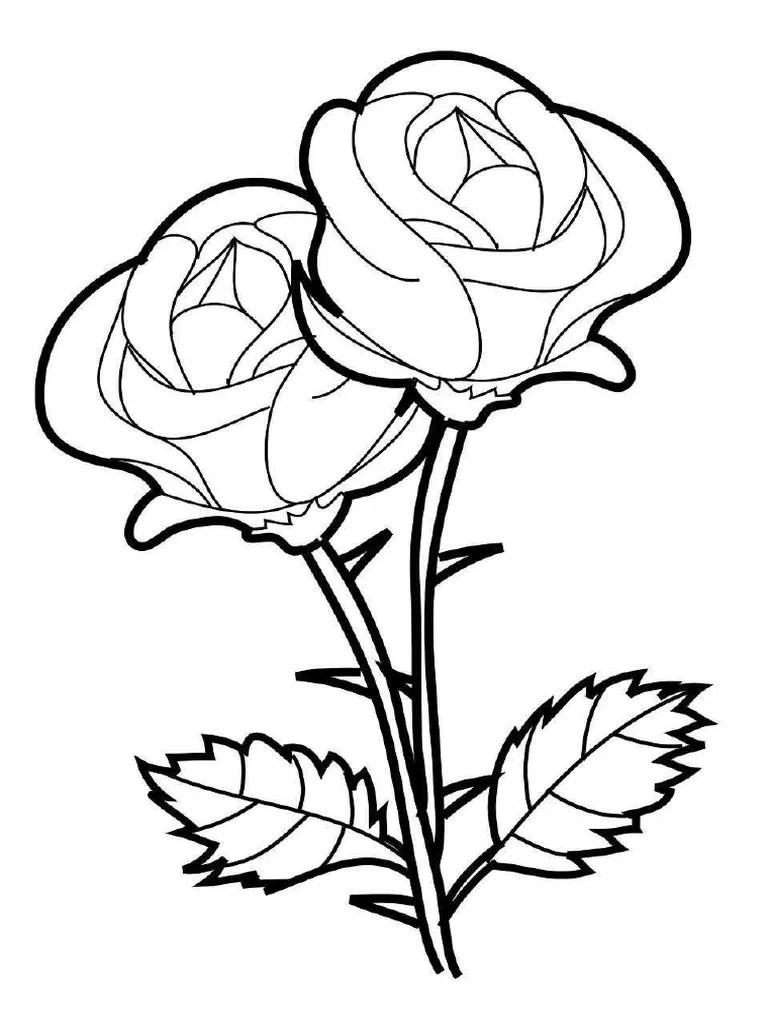 Gambar Bunga Ros : gambar, bunga, Gambar, Bunga