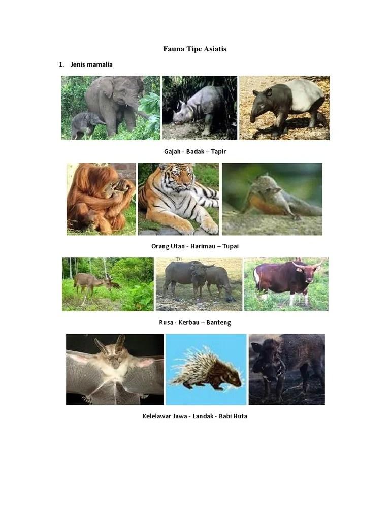 Jenis Fauna Tipe Asiatis : jenis, fauna, asiatis, Fauna, Asiatis