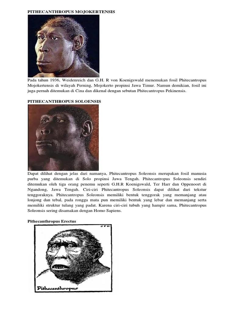 Manusia Purba Pithecanthropus Mojokertensis : manusia, purba, pithecanthropus, mojokertensis, Pithecanthropus, Mojokertensis